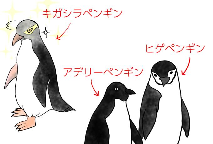 ペンギン三種