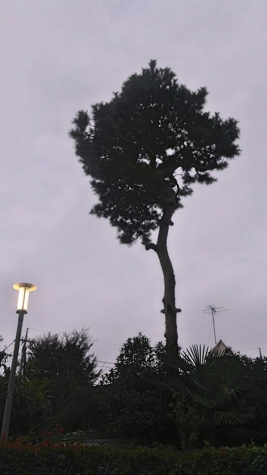 異世界から来た木